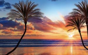 ハワイ大好き海大好き